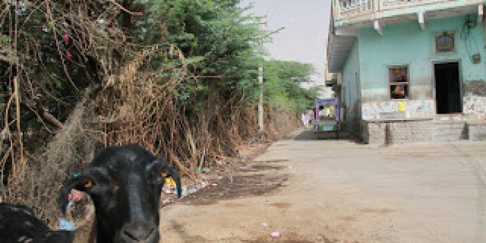 Shekhawati, czyli tam i z powrotem