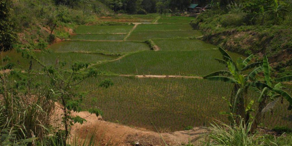 Vamos a la Laos